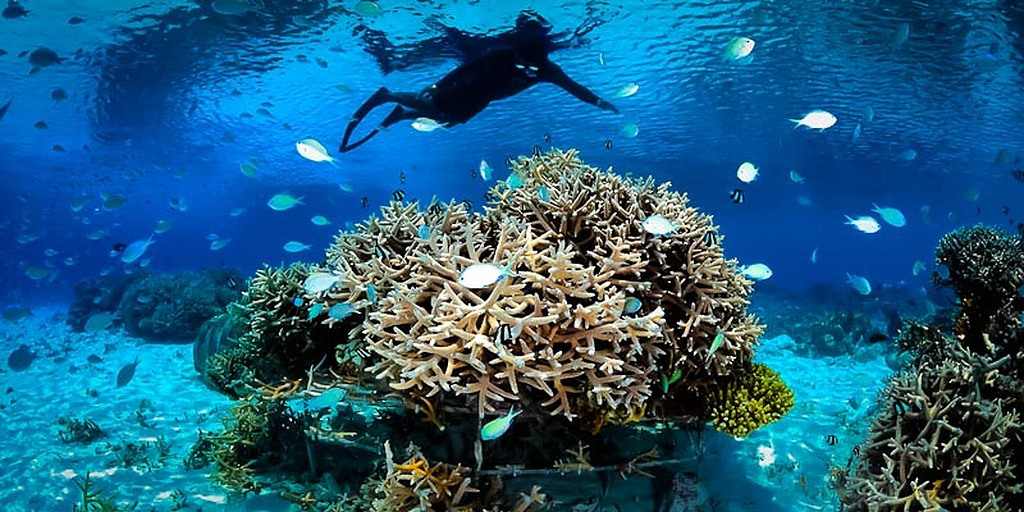Saving Coral Reefs this World Nature Conservation Day