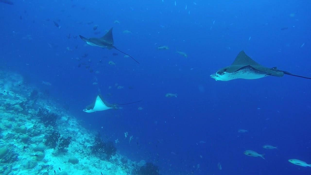 Fuvahmulah's Dive Spot Declared a Protected Area