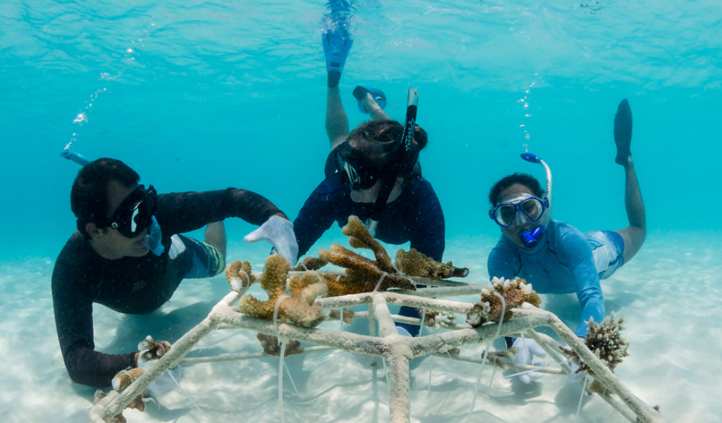 And It's a Wrap! Velaa Private Island Ends the Year with Transplantation of 2000 Corals
