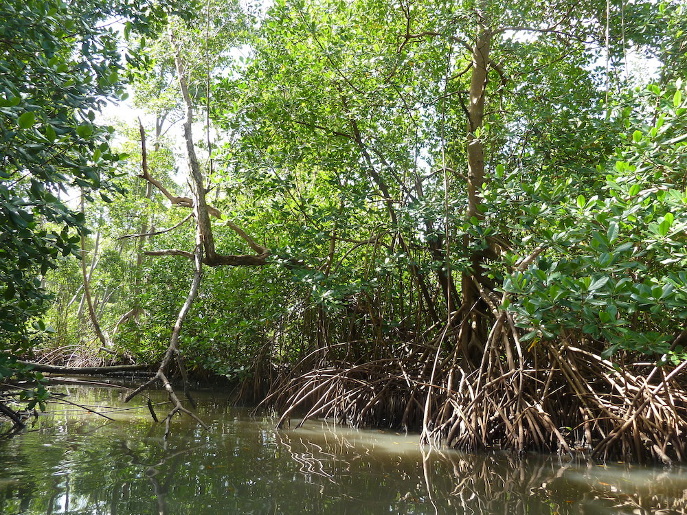 Destroying Mangroves Puts Lives at Risks