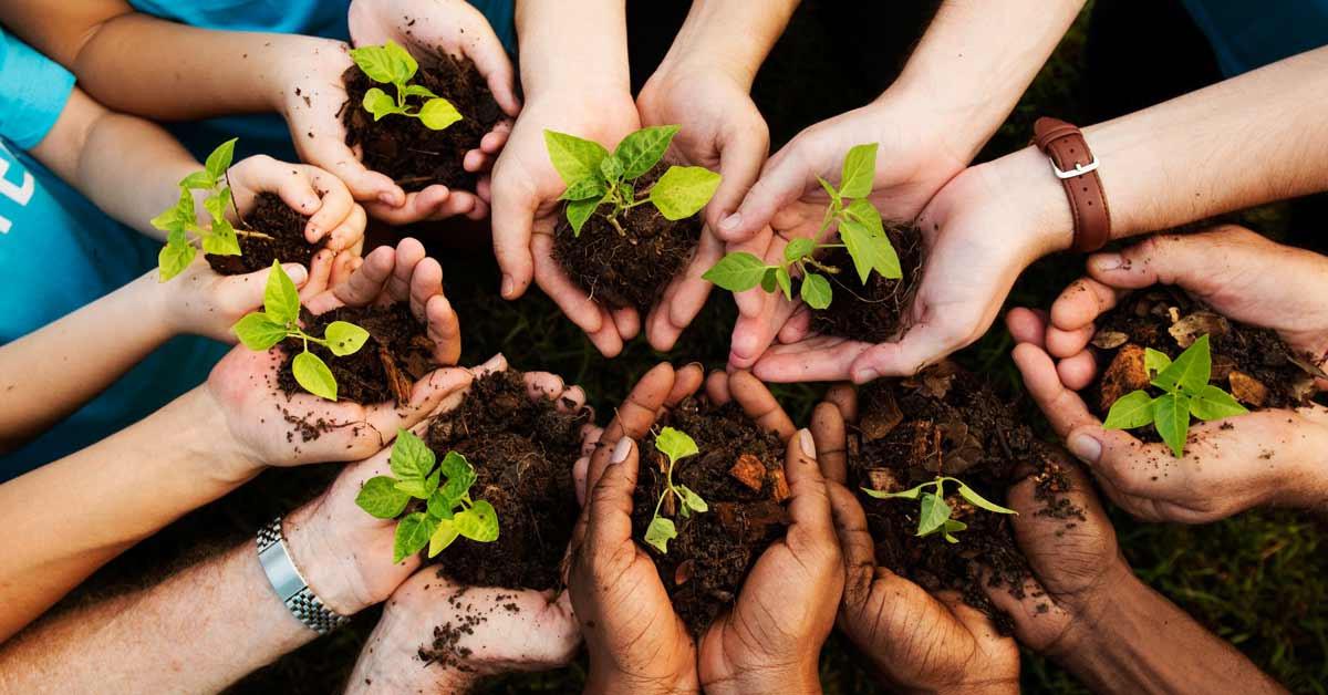 Planting 100,000 Trees at Hoarafushi Airport