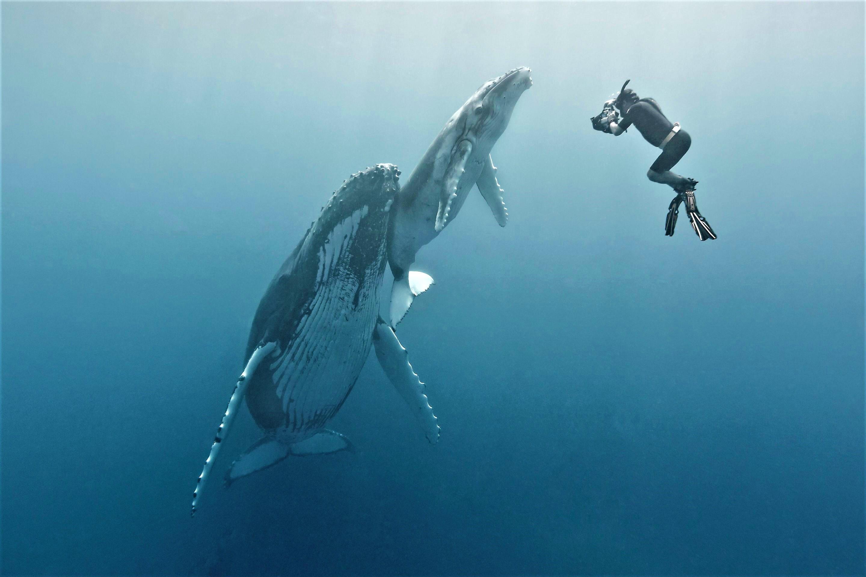 World Ocean Film Festival 2020