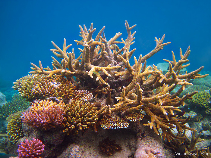 Saving the Coral Reefs in Maldives