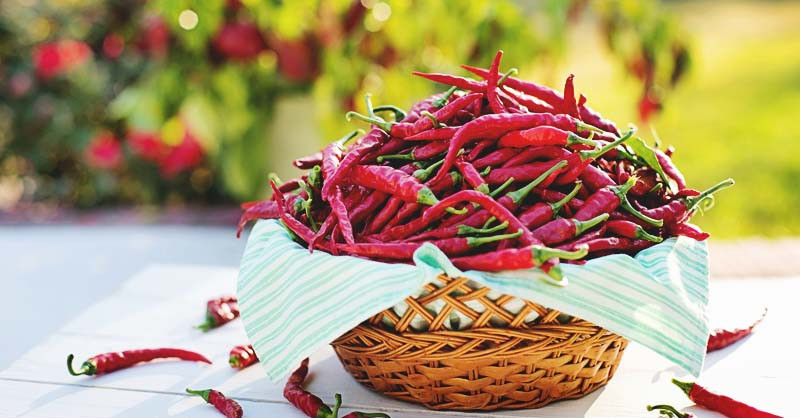 Eating Chilies Can Save Your Life