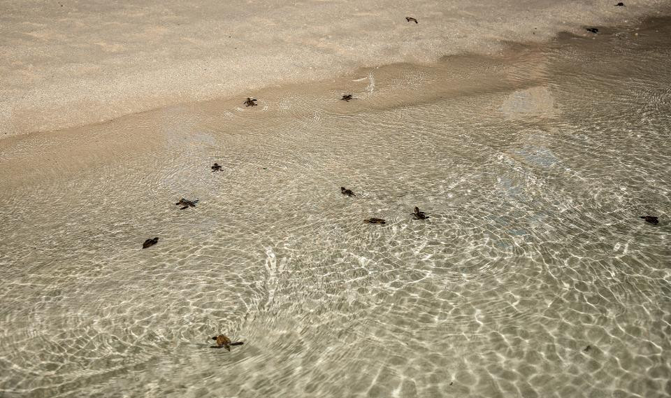 Fasmendhoo Island Turns To A Turtle Nesting Site