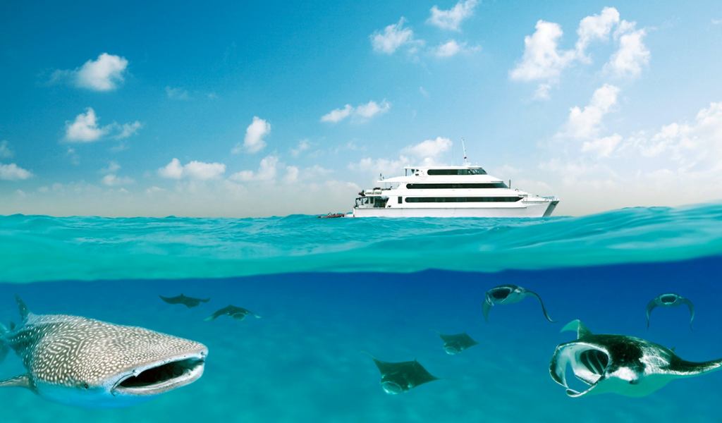 Longing for an Ocean Adventure of a Lifetime?
