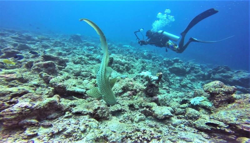 Maldives Affordable Luxury - TME Retreats Dhigurah